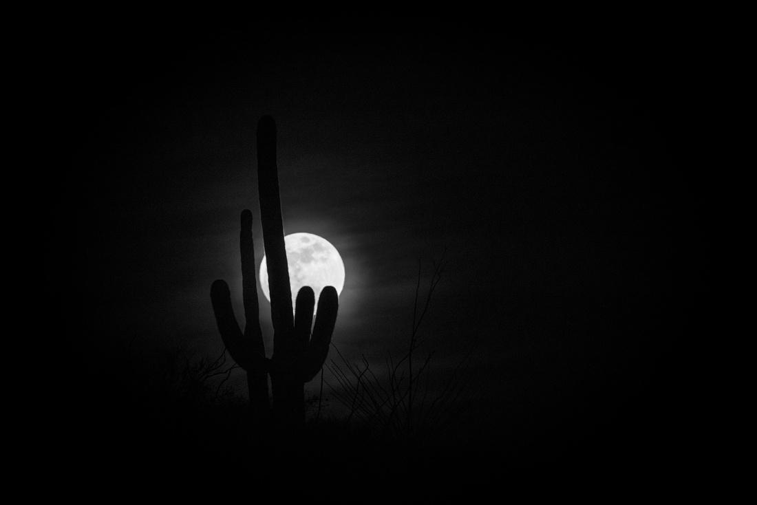 Super Moon & Saguaro Cactus