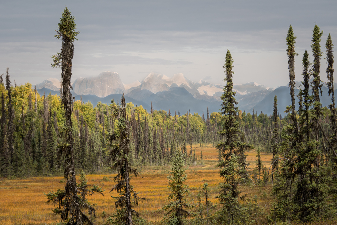 Fall Meadow And Mount Denali