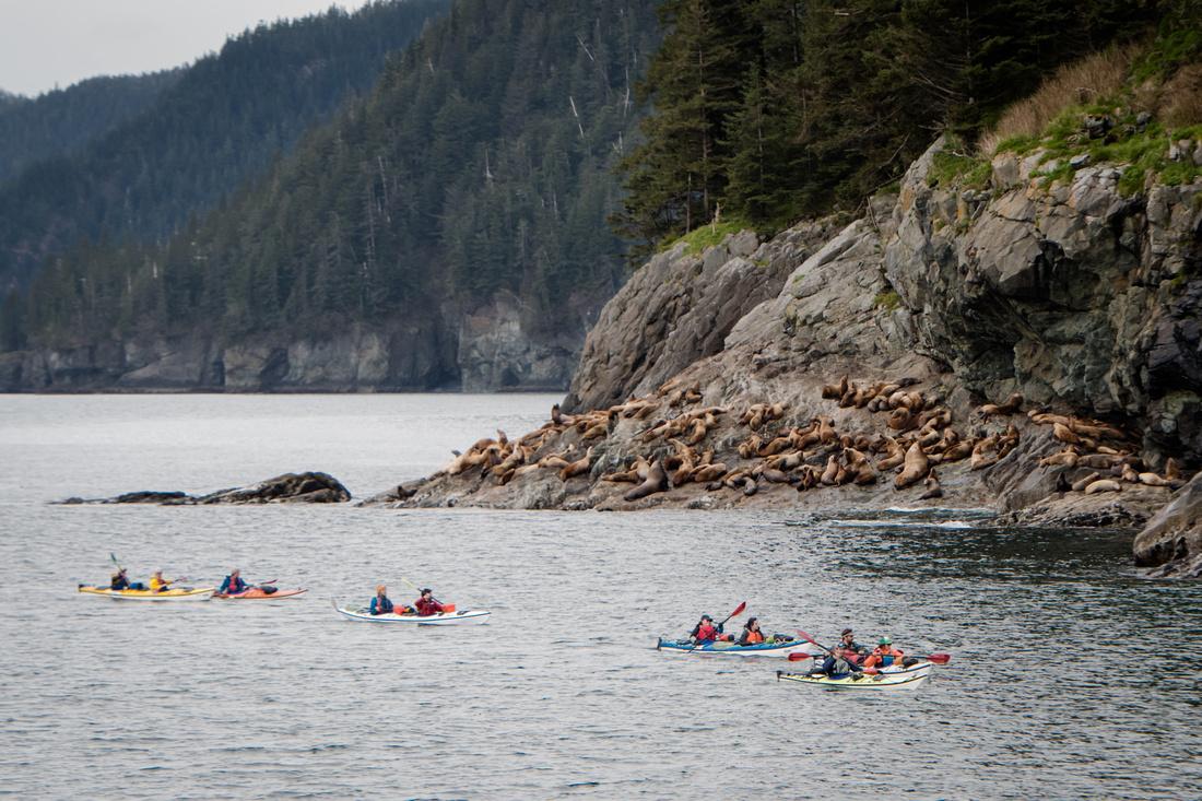 Kayaking Past Sea Lions