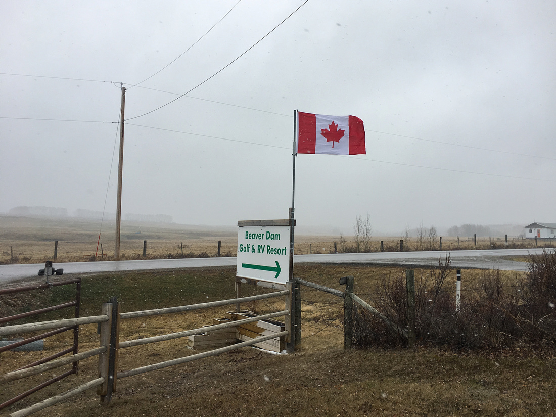 Canadian maple leaf flag blowing in a snow storm at Beaver Dam Golf & RV Resort in Madden, Alberta, Canada